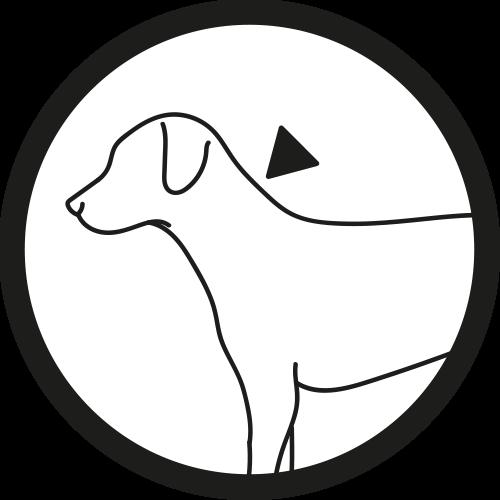 Hund: Auftragen 3
