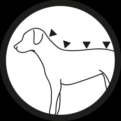 Hund: Auftragen 4