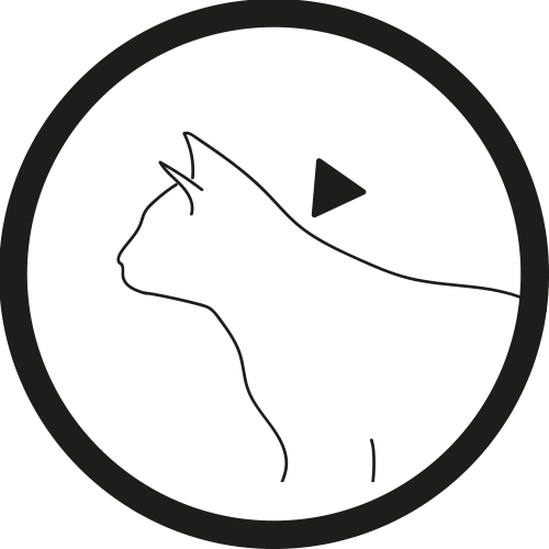 Katze Auftragen 3